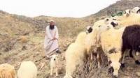 همگام با نبی رحمت قسمت سوم