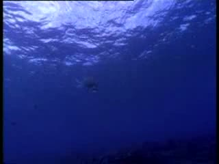 صدای دریایی (2)