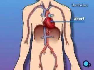 قلب انسان مرکز تفکر و تعقل